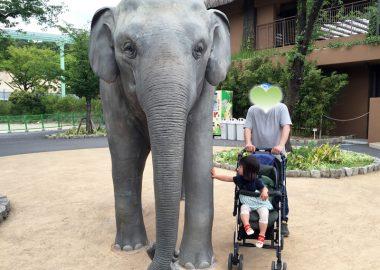 東山動物園 ゾウ