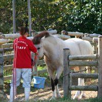 うだアニマルパークでポニー乗馬体験