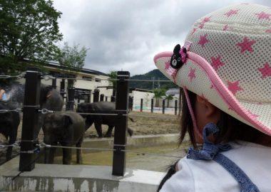 京都市動物園のぞう