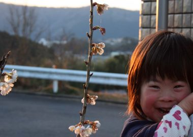 自宅庭のさくらんぼの花