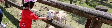 めえめえ牧場で羊に餌をやるダウン症の娘