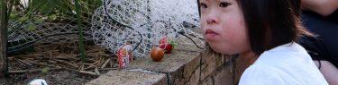 自宅庭でミニトマトを収穫