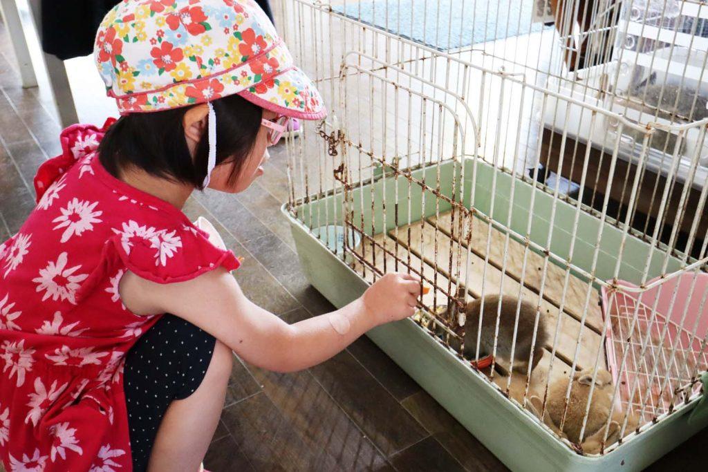 綾部ふれあい牧場・ウサギに人参を上げるダウン症の娘